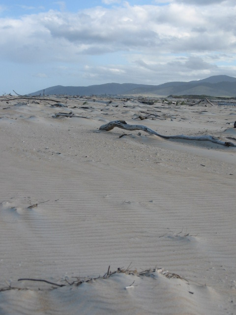 These windblown dunes were filled with shells, driftwood and other debris,