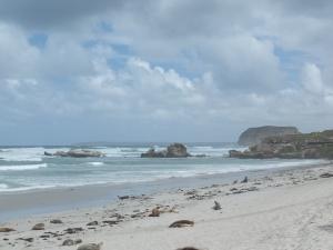KI Sea Lions on the beach.