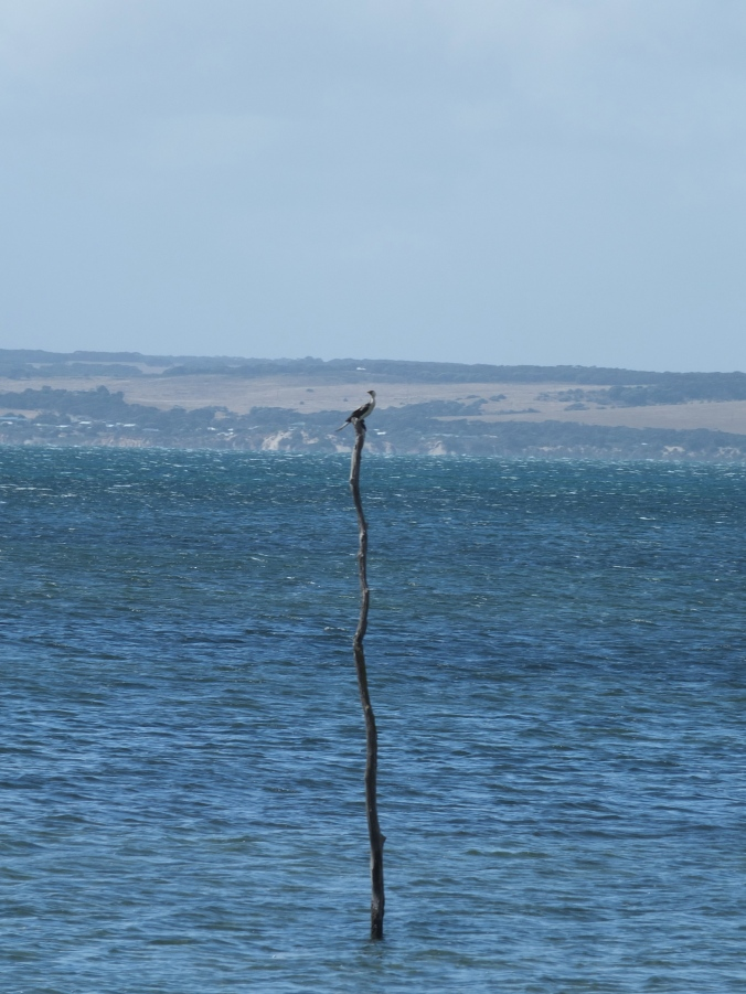Bird on a pole. That is all.