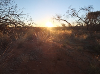 Spinifex Sunset