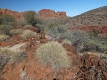 I love desert plants