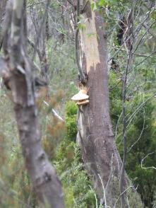 Fungus anyone?