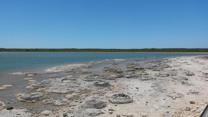 Stromatalites at Lake Thetis