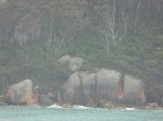 Rocks and Lichen